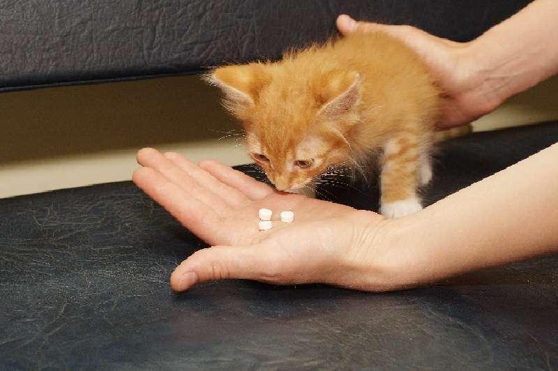 Панлейкопению у кошек лечение в домашних условиях