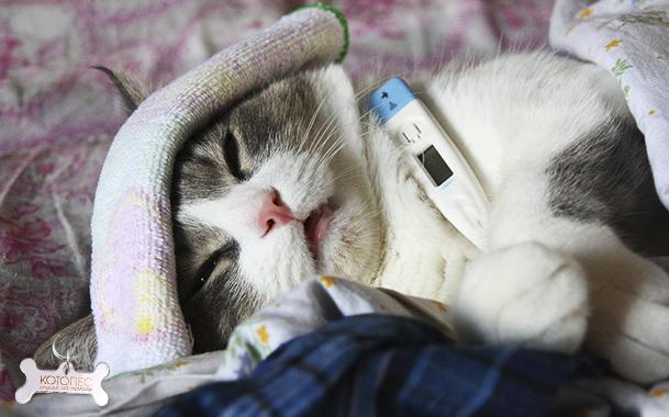 Чем лечить сопли у котенка в домашних условиях EpifanAdmin.ru
