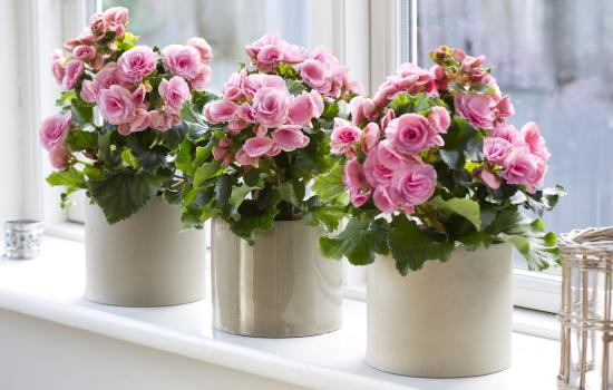 Цветы в горшках уход в домашних условиях