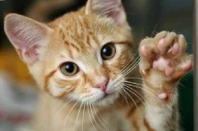 Если кошка топчет вас лапками