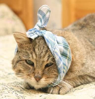 Отит у кошек симптомы и лечение