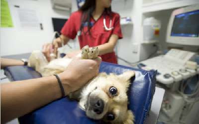 Пиометра у собак симптомы и лечение