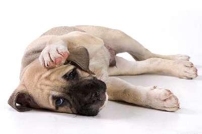 Что делать если собака отравилась лечение