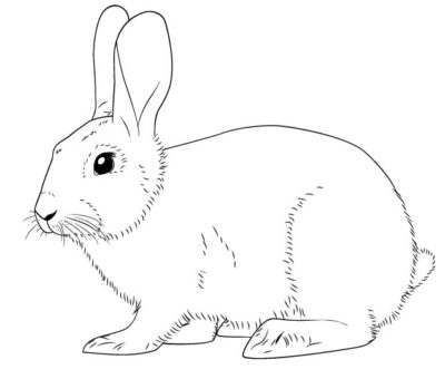 Как рисовать зайца
